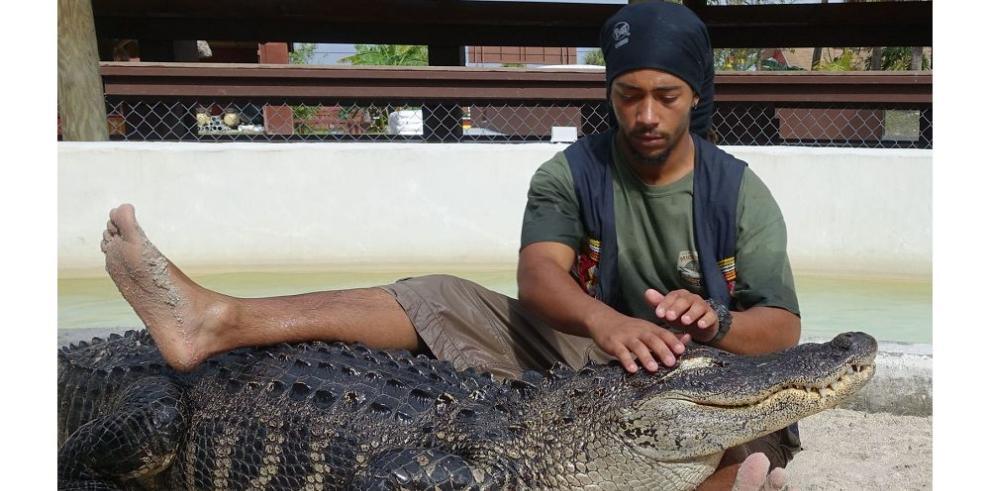 Con honor y a salvo, se retira el último domador de caimanes