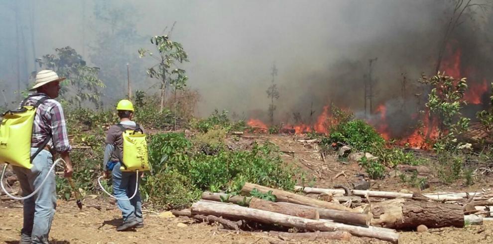Incendio consume 70 hectáreas de Pino en Cañazas de Veraguas