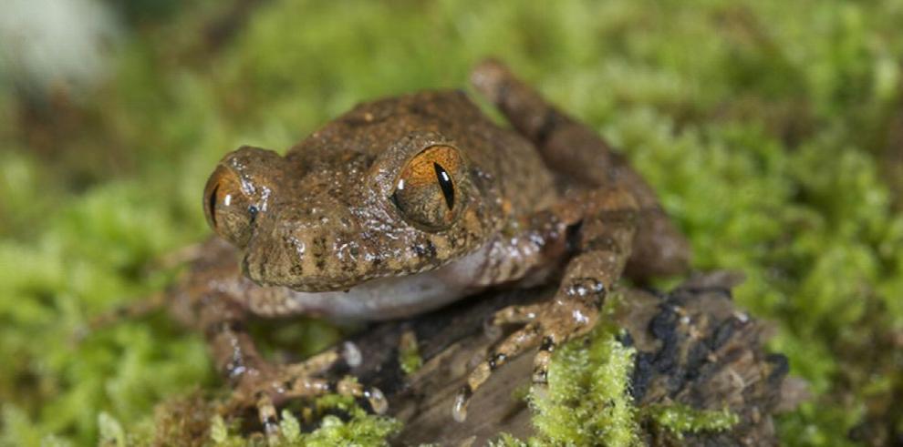 Científicos descubren 163 nuevas especies en China, según WWF