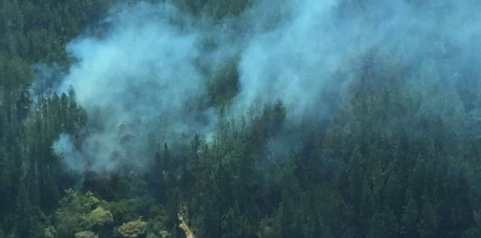 Incendio en La Yeguada arrasó con 15 hectáreas de pino