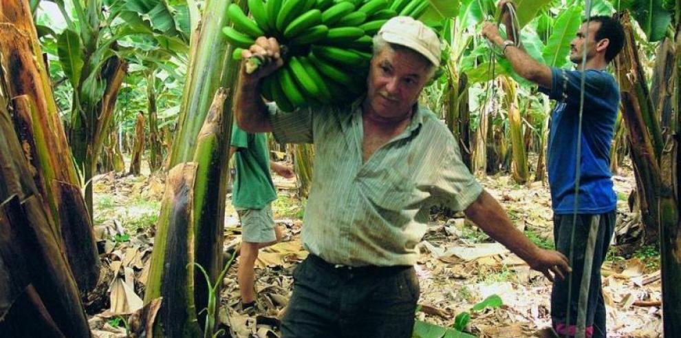 Gobierno espera concluir negociaciones y activar zona bananera de Barú