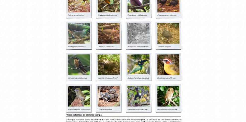 Crean póster para promover la conservación de las aves