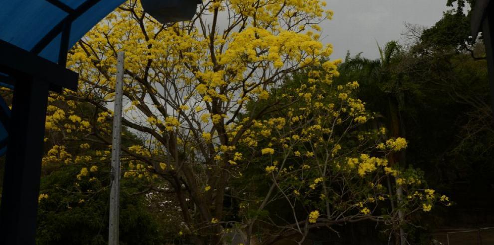 Las flores de abril, en mayo