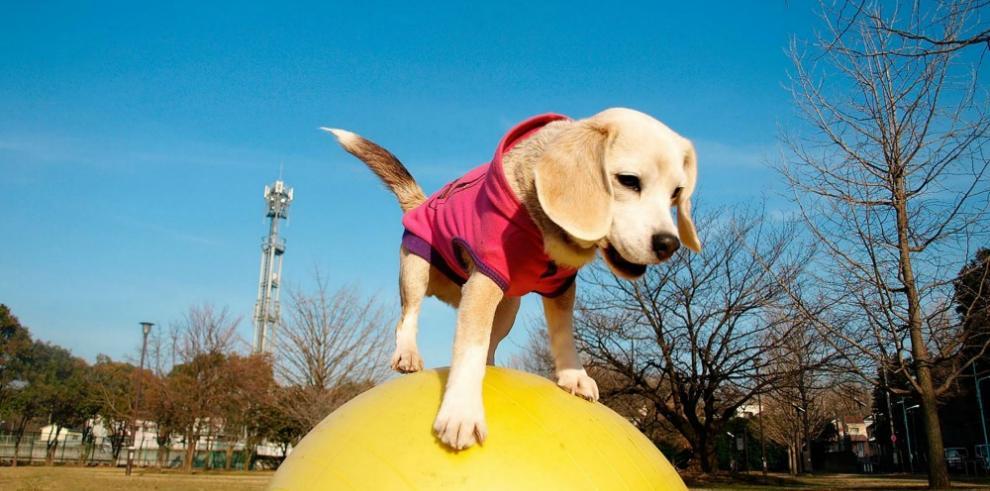 La perrita Purin obtiene su segundo récord Guinness