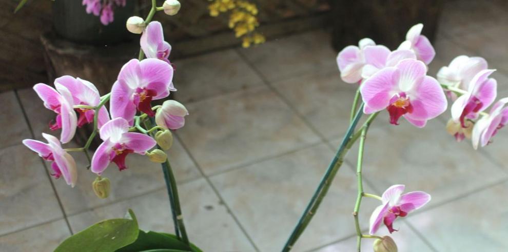 Expo Orquídea, en Boquete, abierta hasta el 3 de abril