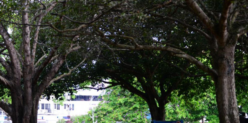 ONU y Parlatino se comprometen a reforzar sostenibilidad ambiental