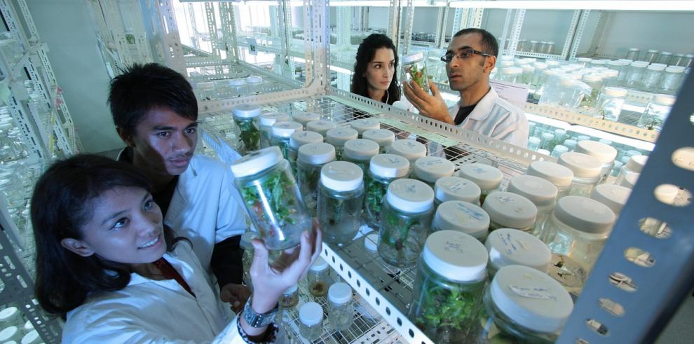 Estudian uso de planta nativa de Colombia para la hipertensión