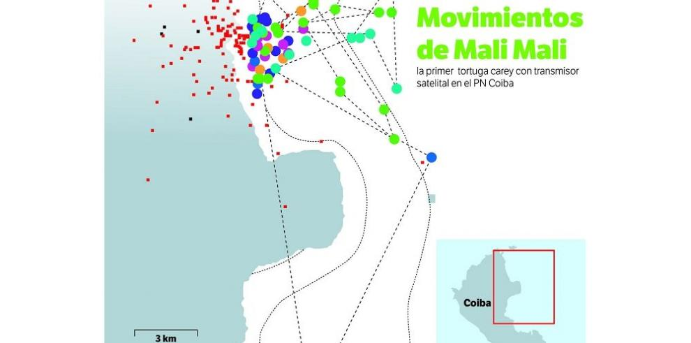 Confirmado, el Parque Nacional Coiba es refugio de las carey