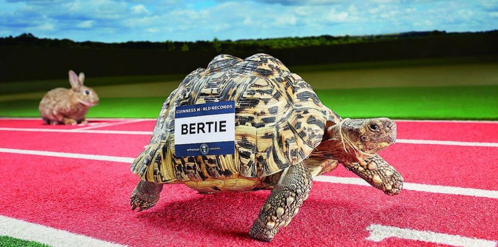Bertie, la tortuga más rápida del mundo