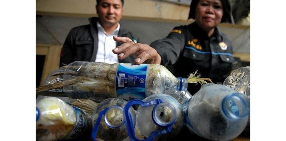 Rescatan cacatúas dentro de botellas plásticas