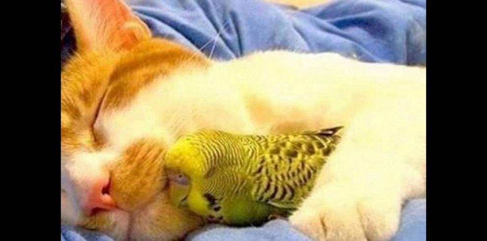 Amistad entre animales de distintas especies