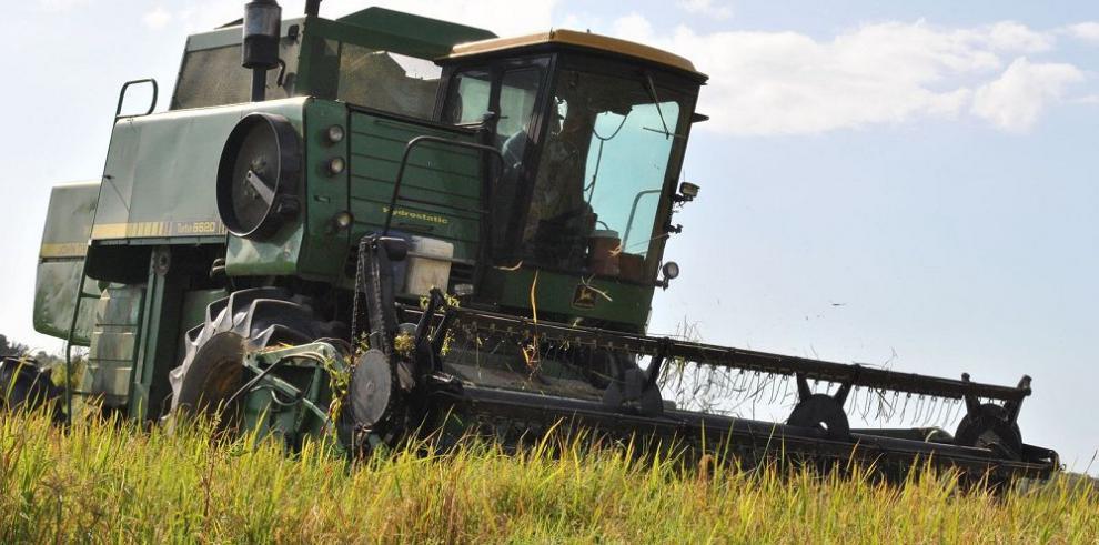 Panamá pierde 14,650 hectáreas de arroz