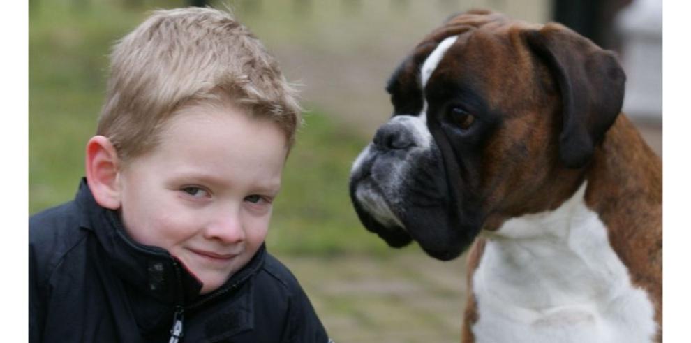 Niños pierden la vista de un ojo por heces de perro