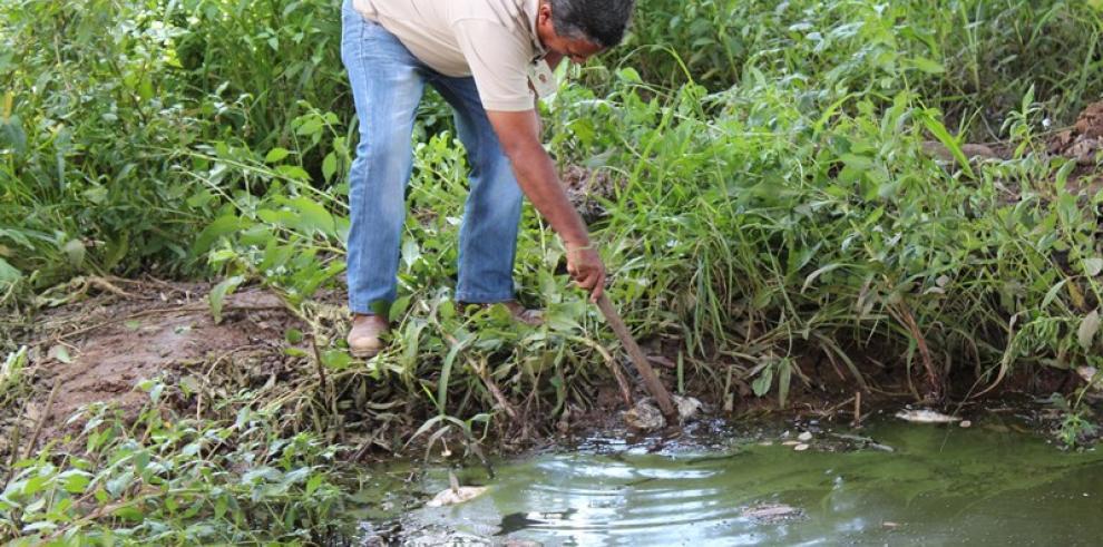 Hallazgo de peces muertos en Río Escotá es investigado