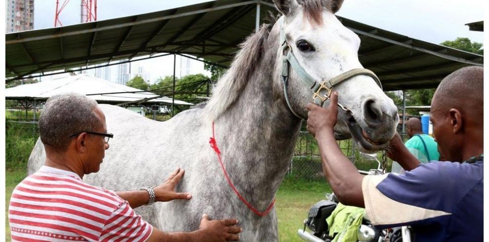 Equinos criollos pasan evaluación