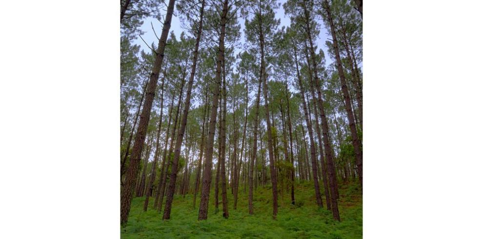 Bosques dependerán del manejo sostenible