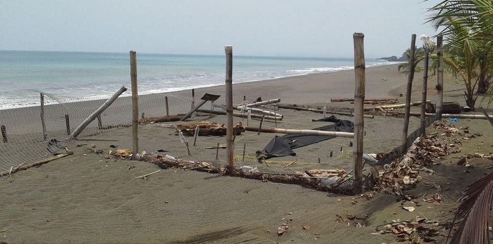 Reconstruyen viveros de tortugas afectados por oleajes, en Veraguas