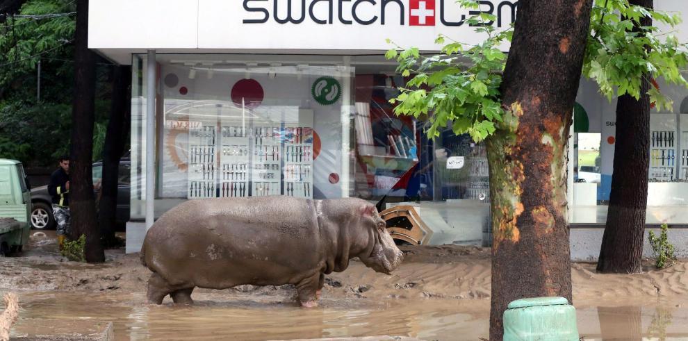 Inundaciones en Georgia cobran doce muertos y fugas de fiera del zoo