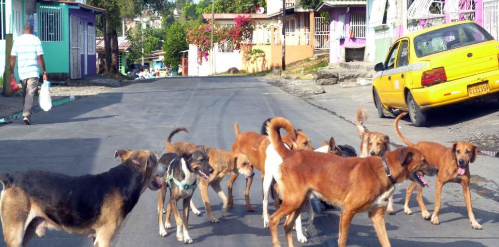 Virus canino nuevo en EEUU infecta a unos mil perros del noroeste
