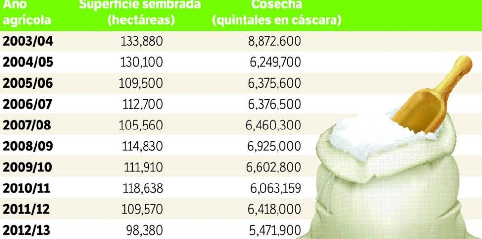 Panamá importará arroz hasta diciembre por escasez del rubro