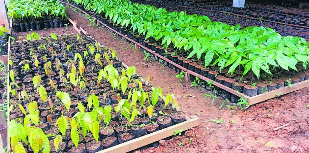 Producirán un millón de plantones este año