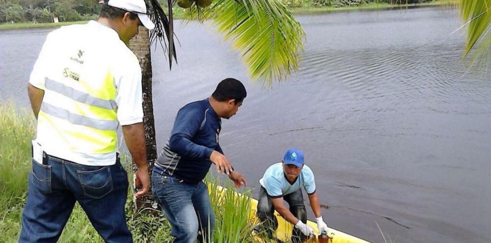 Autoridades aún no dan con la contaminación en isla Colón