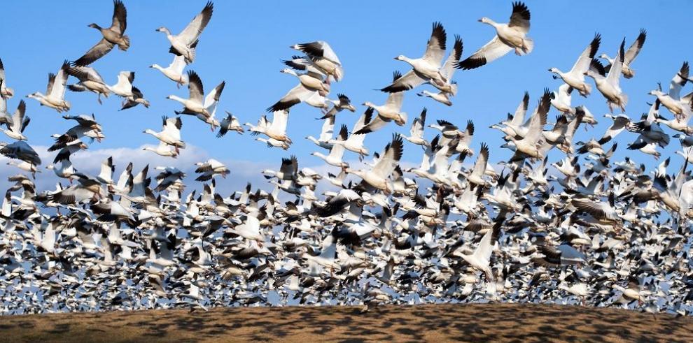 Logran fondos para restaurar los hábitats de las aves migratorias