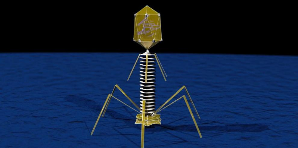 Prototipo de virus para matar bacterias