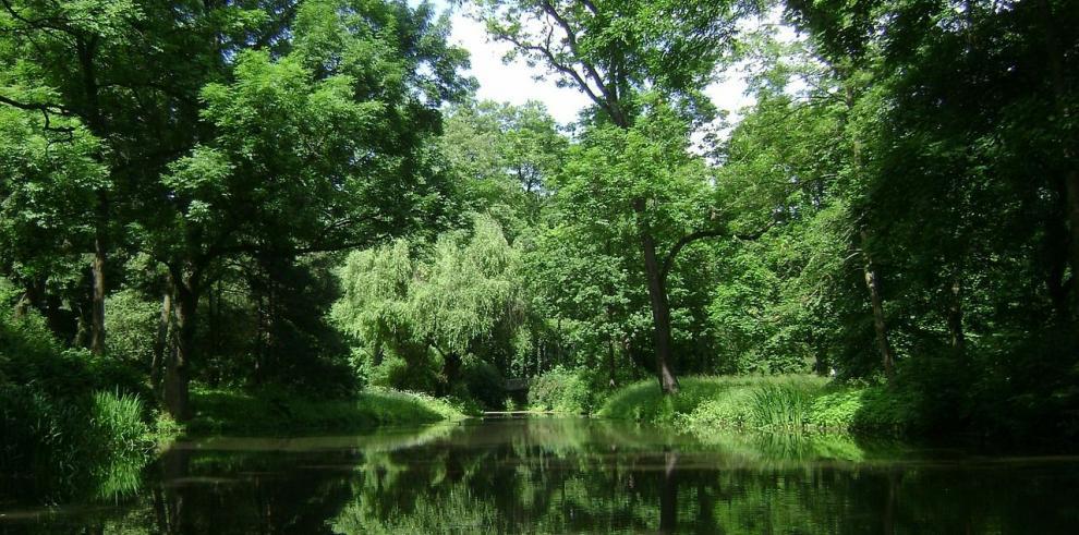 La superficie arbórea es ocho veces mayor de lo que se creía