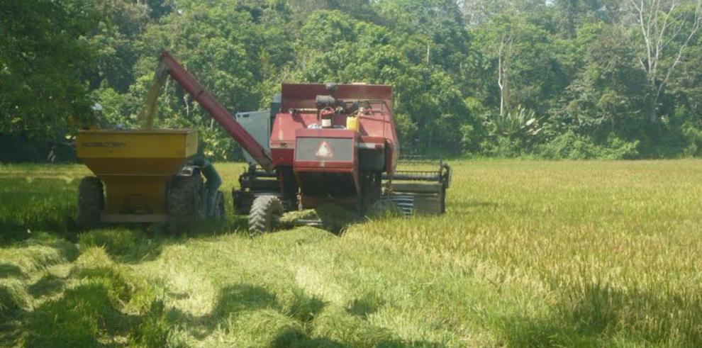 Bajo hectareaje en Chiriquí mantiene en vilo a productores