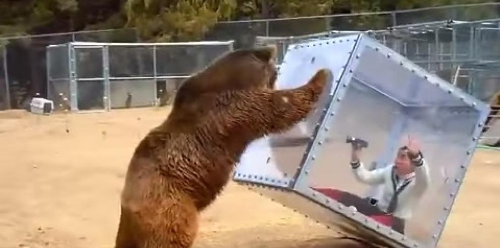 Grizzly Cube: Vive una experiencia con la naturaleza salvaje