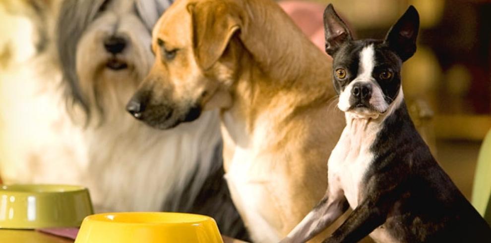 Los perros rechazan a las personas desagradables con sus dueños