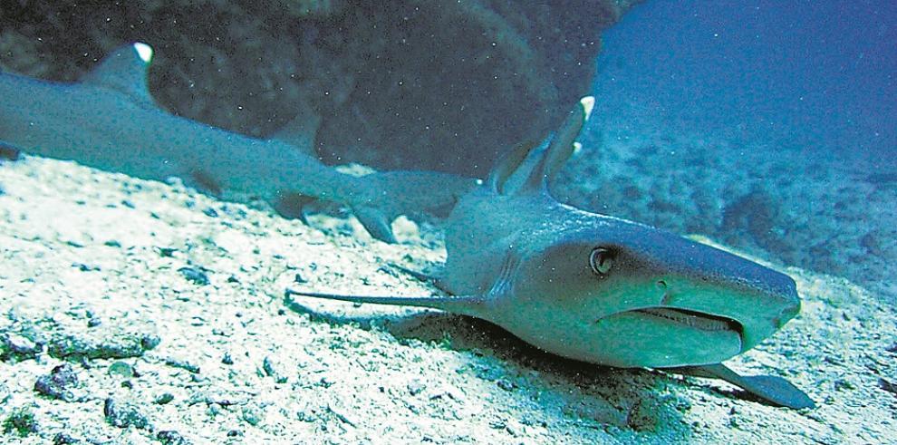 Poblaciones de animales marinos se han reducido a la mitad en 40 años
