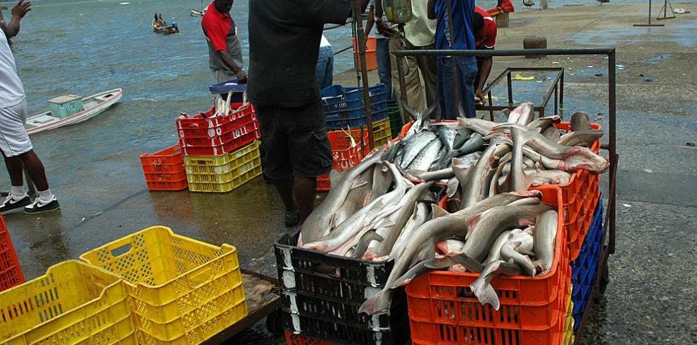 Panamá, pionero en utilizar sistema en línea de monitoreo de pesca