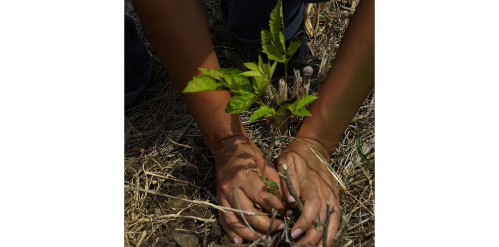 Plantarán 40 mil árboles el Día de la Reforestación