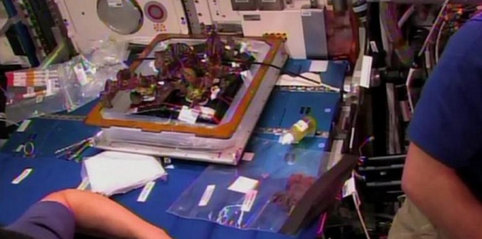 Los astronautas de la EEI saborean la primera lechuga espacial