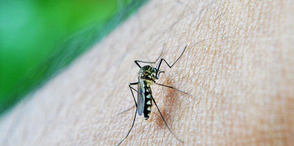 Taiwán supera las 20.500 infecciones por dengue y confirma 56 muertes