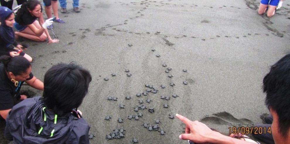 Promueven el reciclaje para salvar a las tortugas