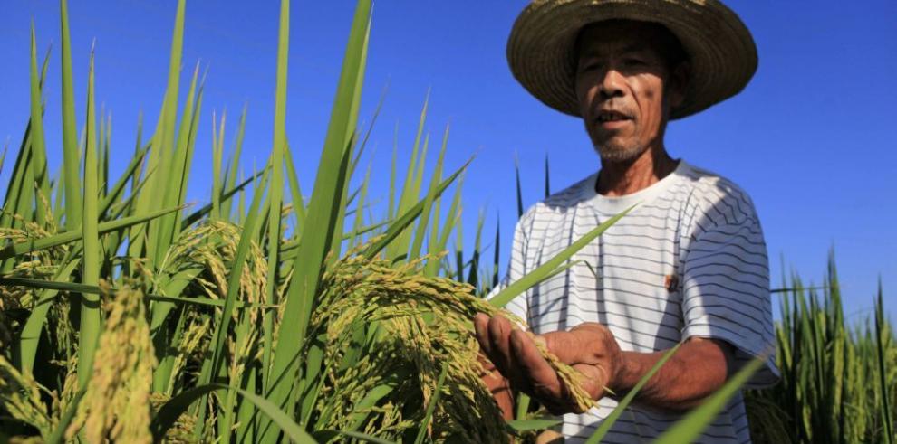 Abogan por reducir la pobreza con agricultura familiar en AL