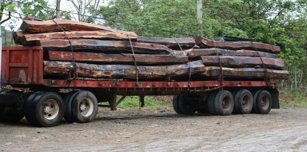 El 96% de la madera extraída de Darién es ilegal