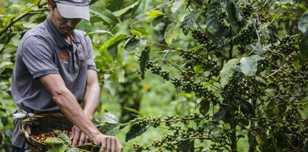 Campesinos no venderán granos a Gobierno de Nicaragua en protesta por canal