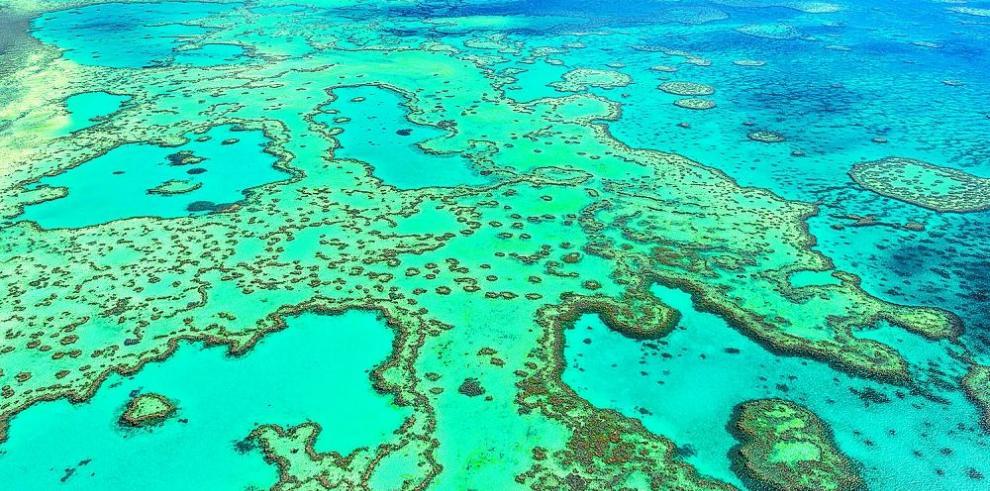 Plan conservará la Gran Barrera de Coral