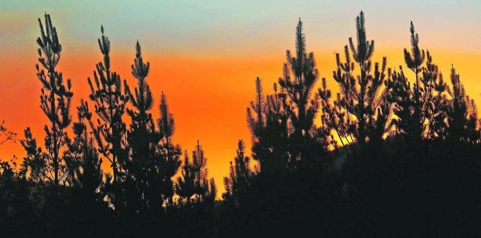 La prioridad, evitar avance del fuego en reservas naturales