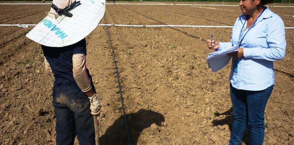 Mitradeldetecta 5 menores trabajando en cultivo de sandía en Veraguas