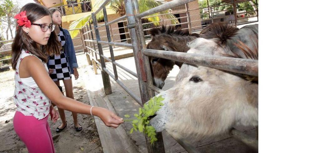 Animales de corral y silvestres, atractivo ecoturístico en Panamá