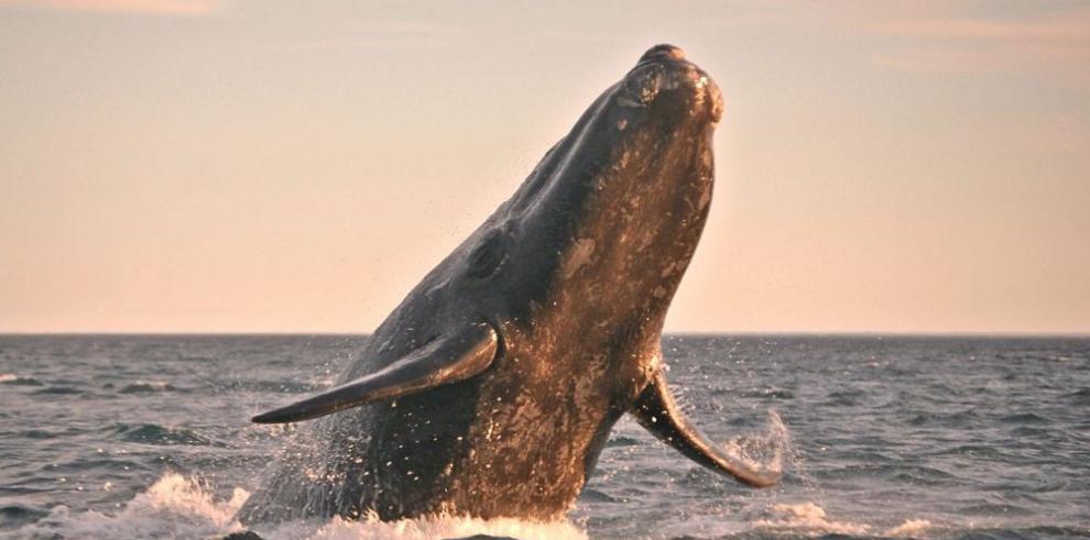 Estrellas del turismo en Baja California Sur