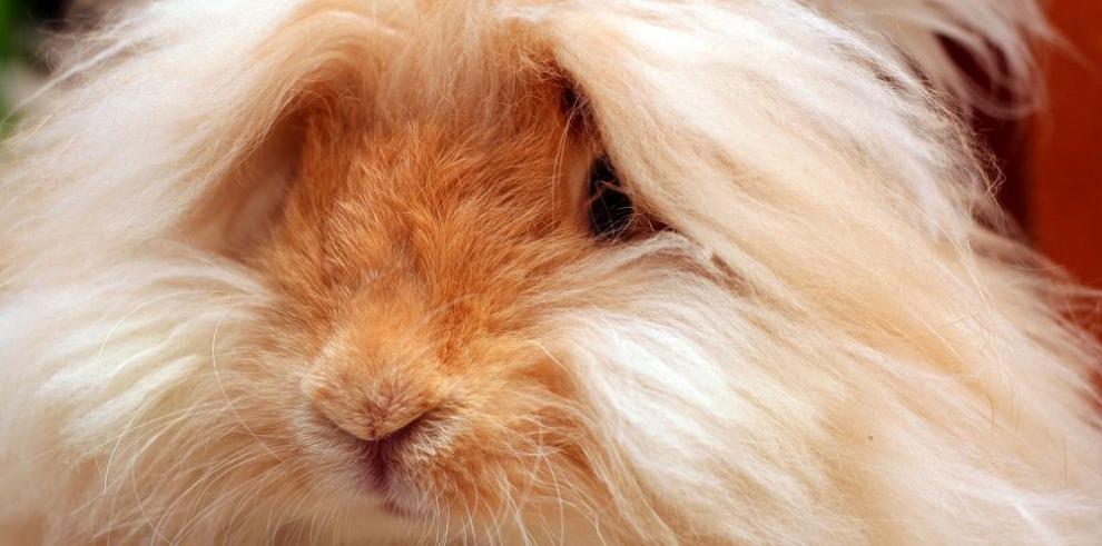Contra productos vinculados al maltrato animal
