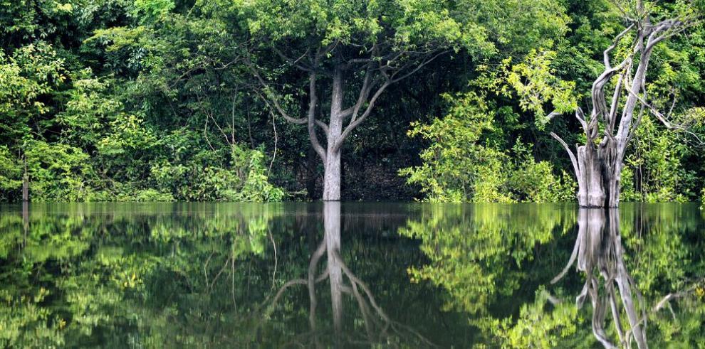 """""""Brasil deforesta el equivalente a un país pequeño cada 4 años"""""""