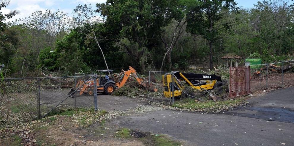 Derriban 40 árboles en las áreas revertidas