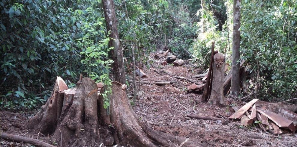 Plan forestal, una esperanza para salvar los bosques de Darién